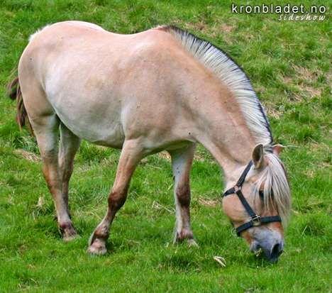 FRØYA A HORSE A RIDE!!!!!