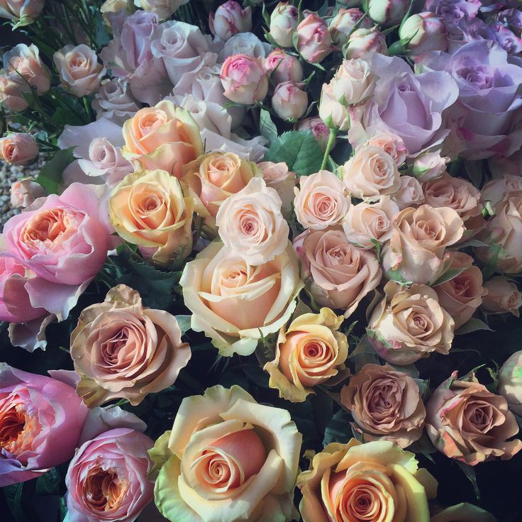 Rose Heaven www.theenchantedflower.co.uk