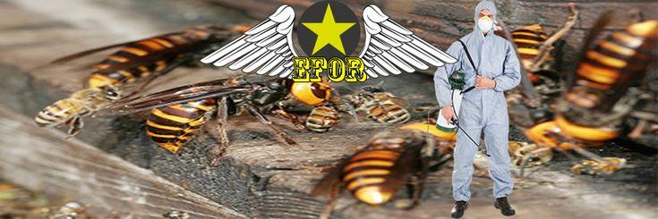Arı İlaçlama Servisi