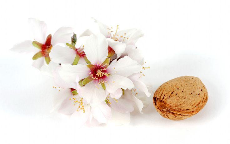 flor-del-almendro-con-almendra.jpg (1600×1000)