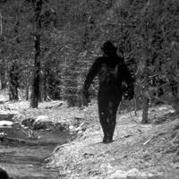 Bigfoot seen walking the hwy 58 near Cresent Lake.