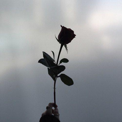 Immagine di rose, black, and flowers