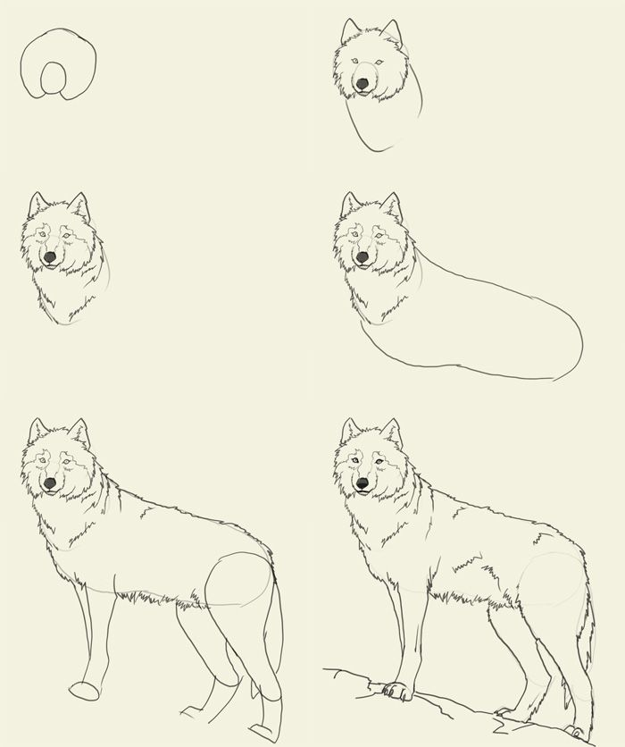 how to draw a wolf pup step by step