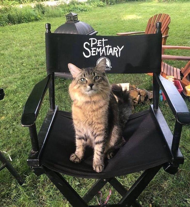 Pet Sematary (2019) 🐈 Pet Sematary in 2019 Pet