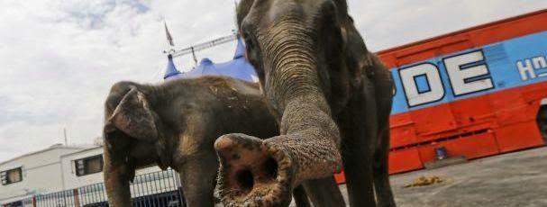 """""""O GRITO DO BICHO"""": Associações de defesa dos animais entregam carta d..."""