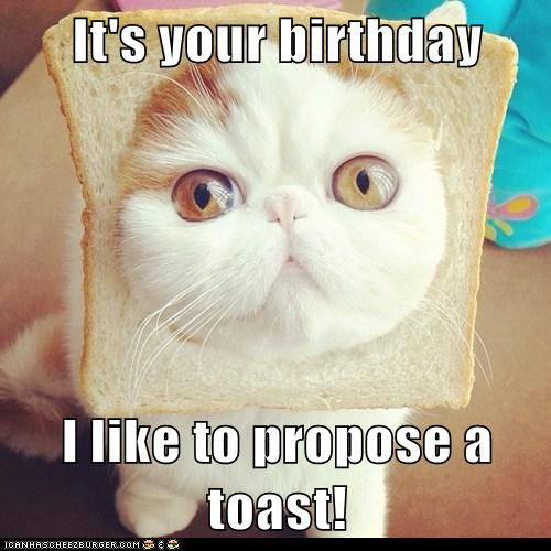 It's your birthday  I like to propose a toast! Love you Jamie! I know how much you love kitty cats ;-)