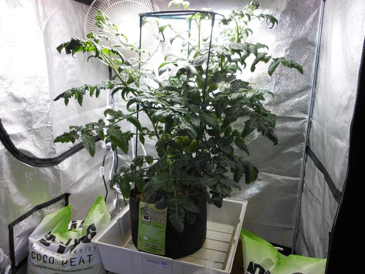 17 Best 1000 images about Hydroponics Indoor Gardening on Pinterest