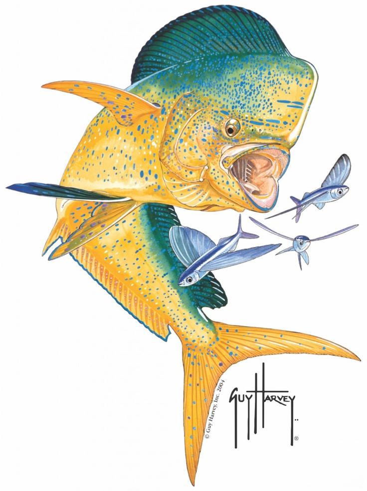 Guy Harvey Bull Dolphin Window Sticker | Tattoos ...