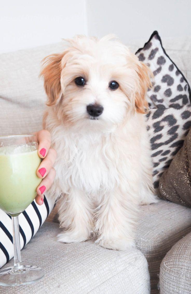 best cute puppy land images on pinterest pets cutest animals