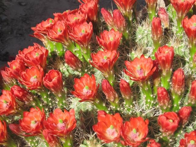 1000  images about native new mexico plants on pinterest