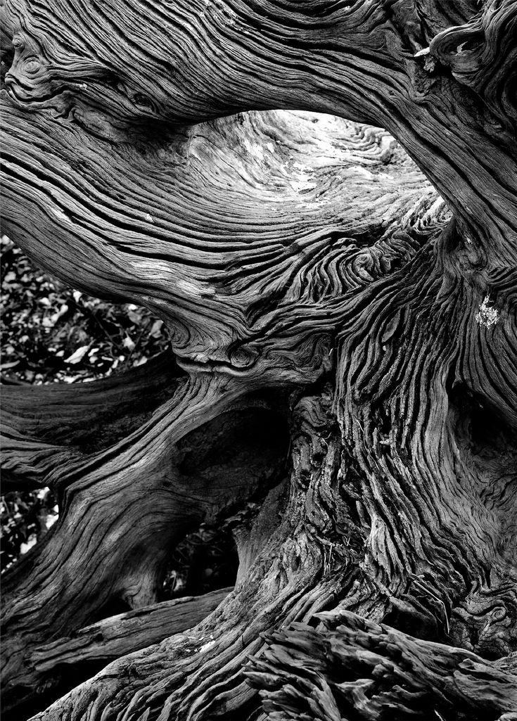 Driftwood Textures - organic line patterns; natural texture inspiration