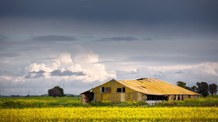 https://flic.kr/p/LPXGDb | Abandoned shed with canola | Near Millicent, South…