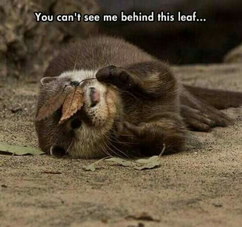 You can't see me!