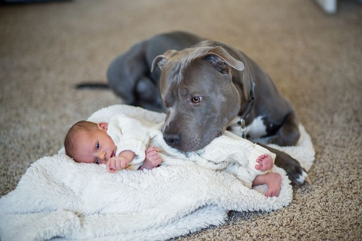 Pit Bull and baby love....My caption: I am NOT saying leave a bay nor small kid with ANY type of dog unattended. But pit bulls r just as sweet, when never trained to be aggressive, as any other dog -Mari