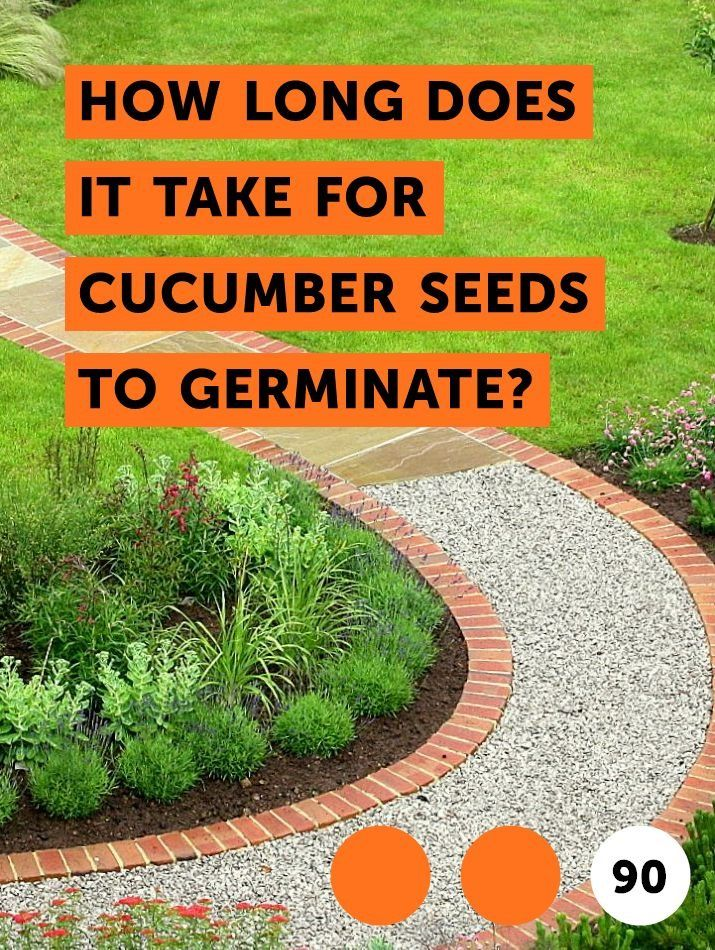 How Long Does it Take for Cucumber Seeds to Germinate ...