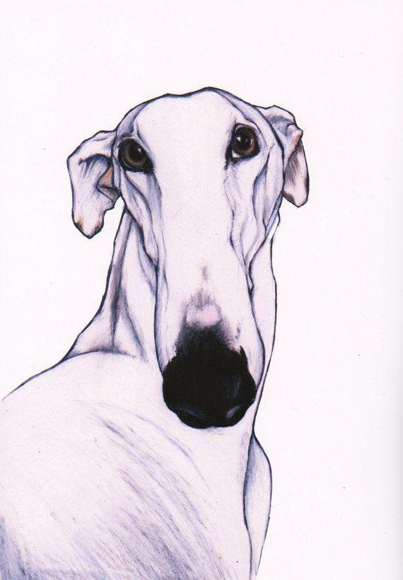 greyhound art print greyhound art images signed by JimGriffithsArt