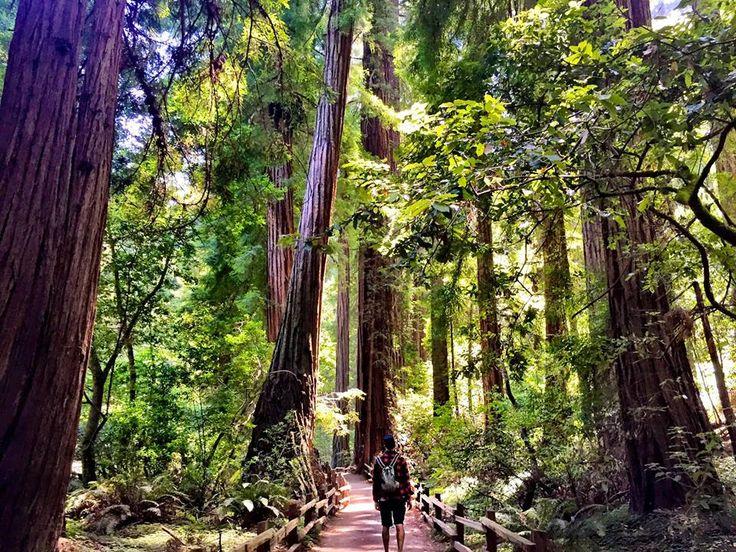 Bird of Balance: Muir Woods San Francisco