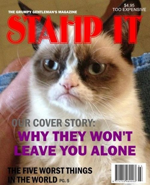 430 best images about grumpy cat on pinterest