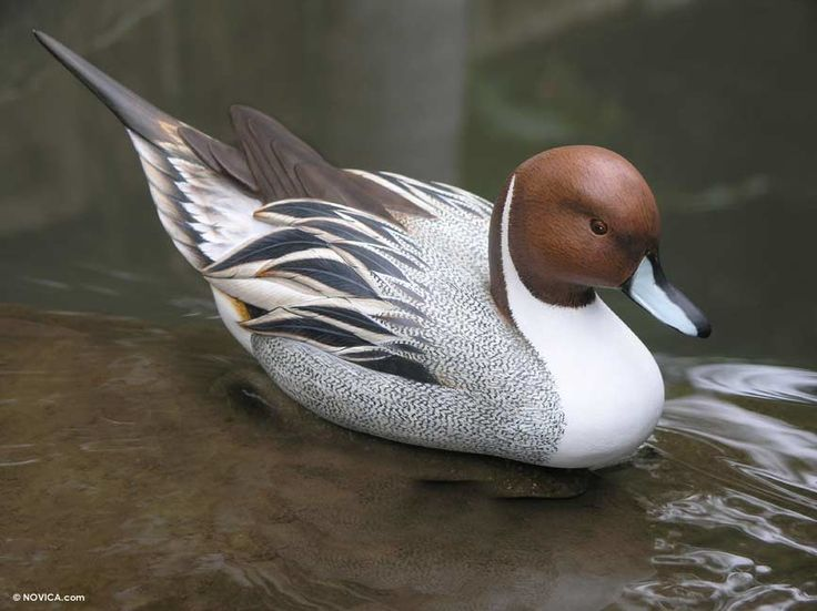 Best images about hand carved ducks on pinterest