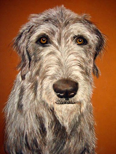Irish wolfhound.  Donation commission for cat rescue