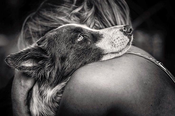 Ausgezeichnet: der Kennel-Club-Hundefotograf des Jahres