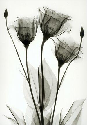 Albert Koetsier x-ray photography