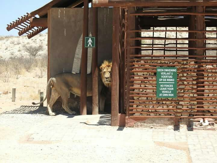 Melkvlei, Kgalagadi Park, South Africa