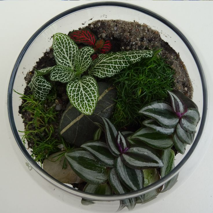 52 best Terrarium bocal images on Pinterest House plants - petit jardin d interieur