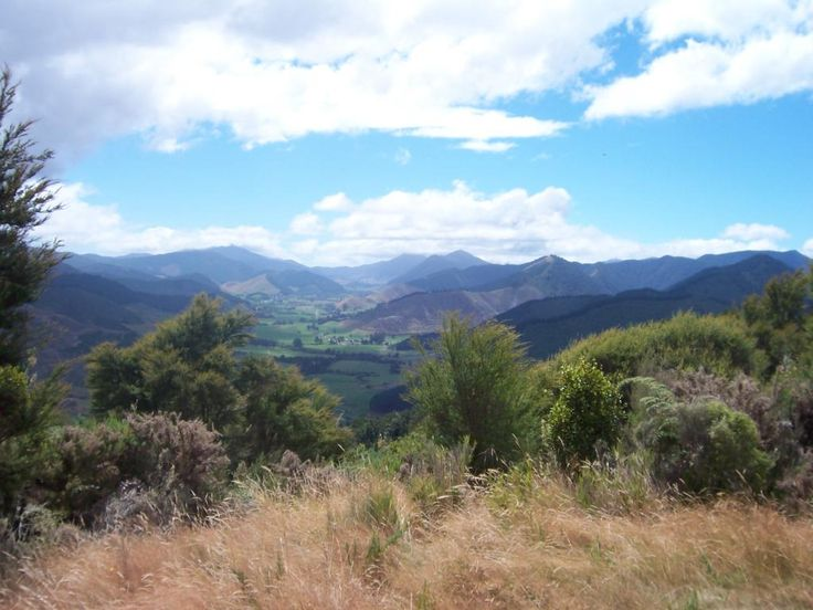 """Hiked all the way up there and saw no one except two wild pigs... #NewZealand #Aotearoa """""""