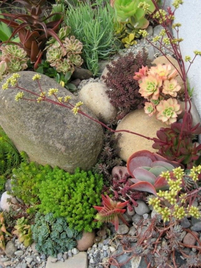 Some photos of my succulent rock garden cacti for Landscaping rocks and plants