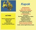 Kapok grows in the top part of the Northern Territory. It contains the powerful antihistamine, quercetin.