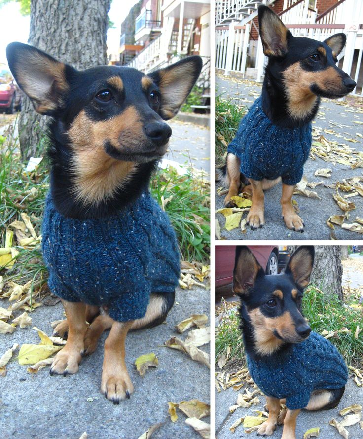 7 besten Pet Clothes Bilder auf Pinterest   Häkeln, Tiere und Hunde