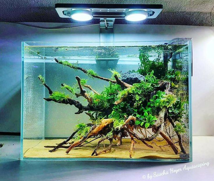 Simple But Eye Catching Aquascape With Low Demanding Plants Attached To The  Wood By Sascha