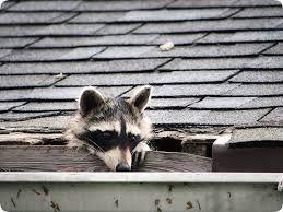 Fix It Now Emergency #Roof #Repair