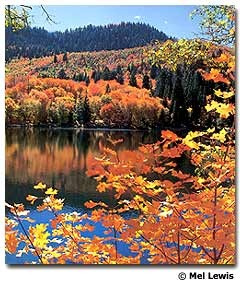 Provo, Utah - The Nebo Loop scenic drive climbs over 9,000 feet in elevation with colourful canyons lined with maples, oaks, and stands of aspen.