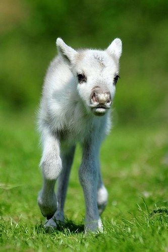Think you know what this cutie is? A baby reindeer! It'll be a while before he's pulling Santa's sleigh.