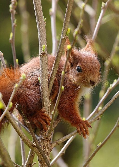 look at this little baby squirrel whom God put in this great big world of ours