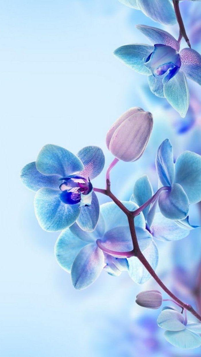 Blue Blooming Flowers Phone Wallpaper Blue Background Spring Flowers Background In 2020 Orchid Wallpaper Spring Wallpaper Flower Wallpaper
