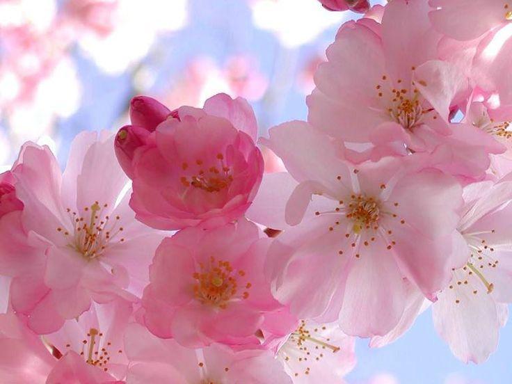 http://flores-de-bach.plus101.com ---Flores De Bach Propiedades. Todos y cada uno de nosotros nos hemos encontrado a lo largo de la vida, transitando por momentos difíciles y dolorosos. ¿Sabía Usted que el 99% de las personas recurren a los mismos metodos para tratar las mismas dolencias sin obtener el resultado buscado? Tal vez Usted se sienta identificado o se reconozca en algunas de las afirmaciones siguientes o esté atravesando en su vida