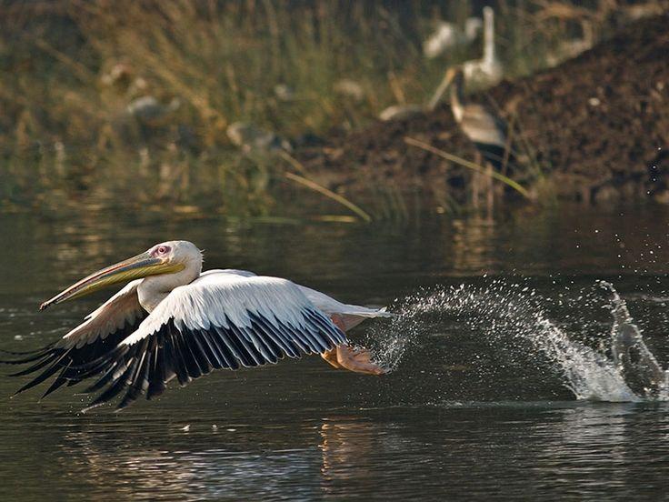 Bird Sanctuaries in Gujarat, India @ Sanctuariesindia.com