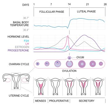 PCOS an Introduction... Know your cycle!!