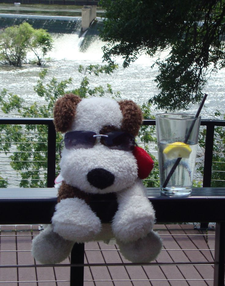 Rocco on vacation in Wisconsin