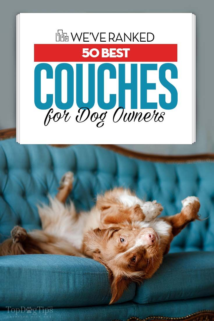 Top 50 Best Couches For Dogs And Their Owners In 2018 Something That S Comfortable Yet Sy Easy To Clean Will Sustain The Damage From Four Paws