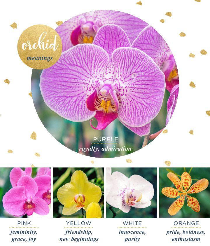 How Cymbidium Flower Symbolism Is Going To Change Your Business Strategies Cymbidium Flower In 2020 Orchid Meaning Flower Meanings Flower Meanings Chart