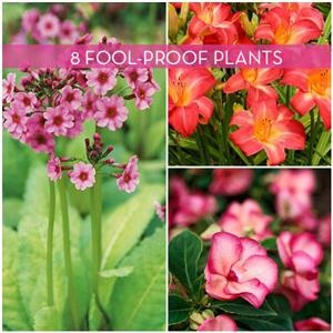 1000 images about landscape ideas on pinterest regional for Low maintenance indoor flowering plants