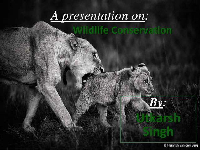 Sample Wildlife Biologist Resume | Tomu.Co