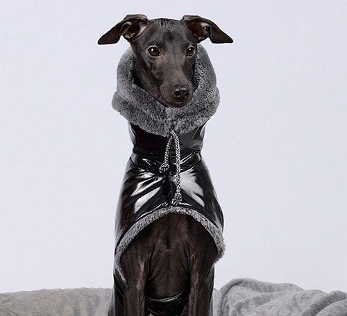 Abrigos, sudaderas y chubasqueros para galgos y podencos :: Carita de Lápiz :: abrigos, chubaqueros, sudaderas, ropa para perros