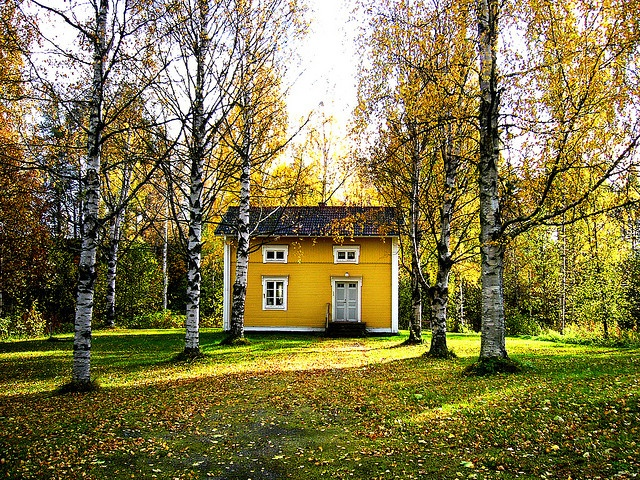Cute little yellow house in a fall setting. My new favorite color and favorite time of year.