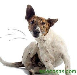 Tus mascotas sin pulgas de forma ecológica y natural - Ecocosas