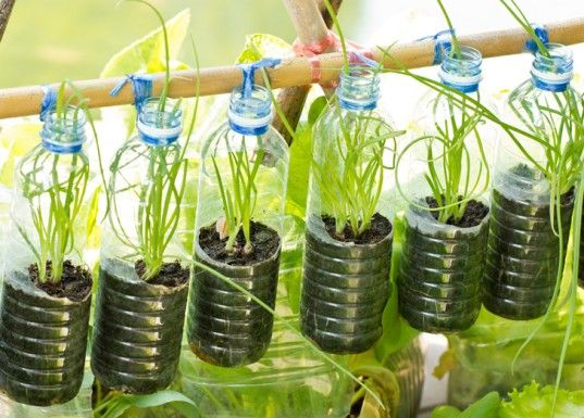 Great idea for window gardening! Check out the link for more small, DIY scale vertical farming ideas.